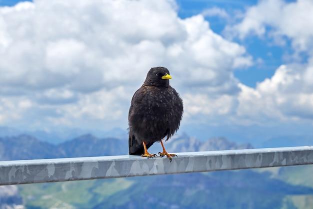 Pássaro preto com bico amarelo, sentado em uma balaustrada