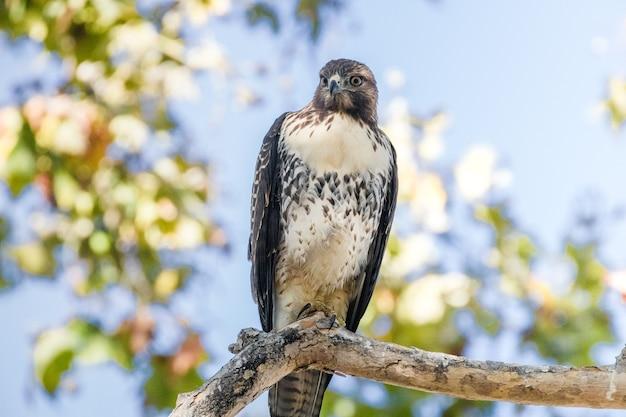 Pássaro preto e branco em galho de árvore marrom durante o dia