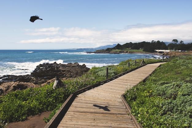 Pássaro preto voando sobre o oceano perto de um caminho de madeira durante o dia