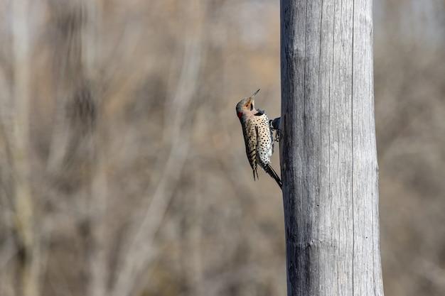 Pássaro se segurando em uma árvore