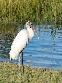 Pássaro selvagem com o rio