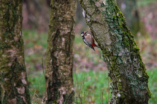 Pássaro sentado na superfície de uma árvore cercado por outras árvores