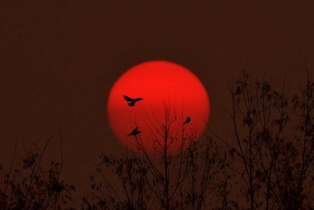 Pássaro sentado nos juncos cantando música