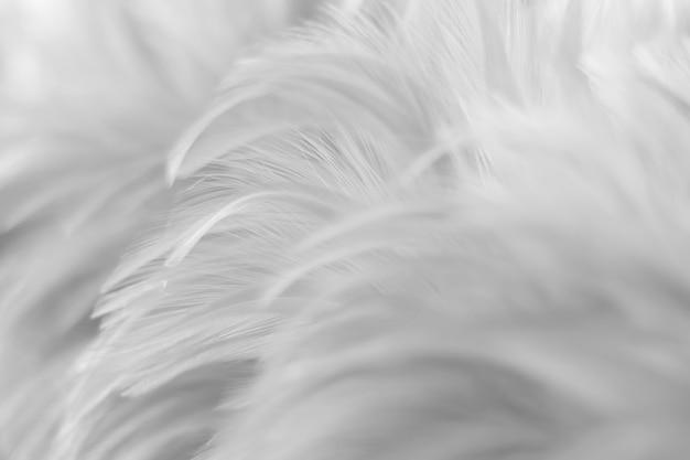 Pássaro, textura de penas de galinhas para plano de fundo