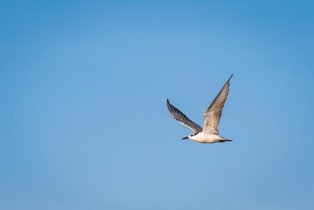 Pássaro voando no céu azul