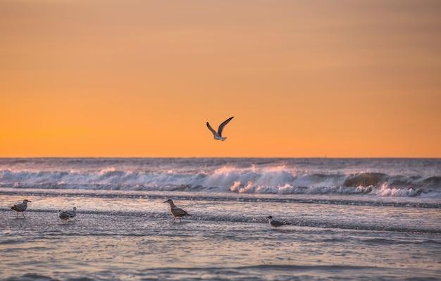 Pássaros à beira-mar. litoral do oceano atlântico perto de nova york na área do parque rockaway
