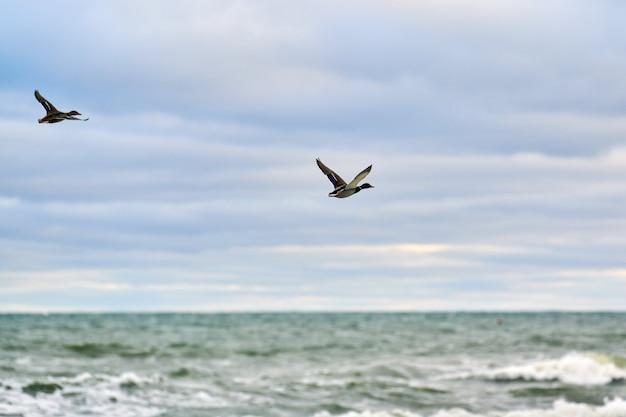 Pássaros aquáticos voando sobre a água do mar