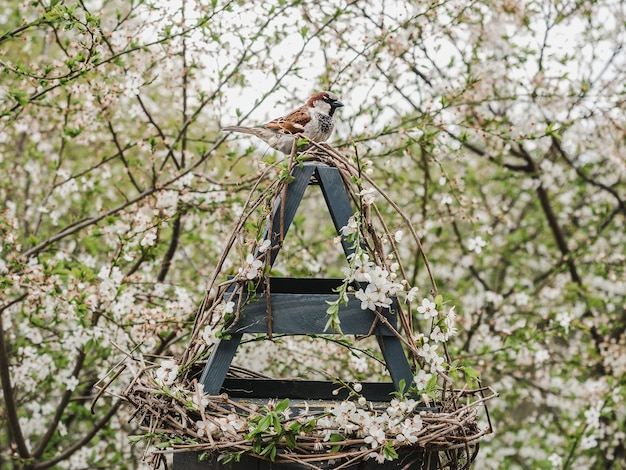 Pássaros bonitos e bonitos em um comedouro de vime. close-up, ao ar livre. luz do dia. conceito de cuidado animal