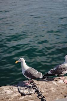 Pássaros brancos e cinza no chão de concreto ao lado do corpo d'água
