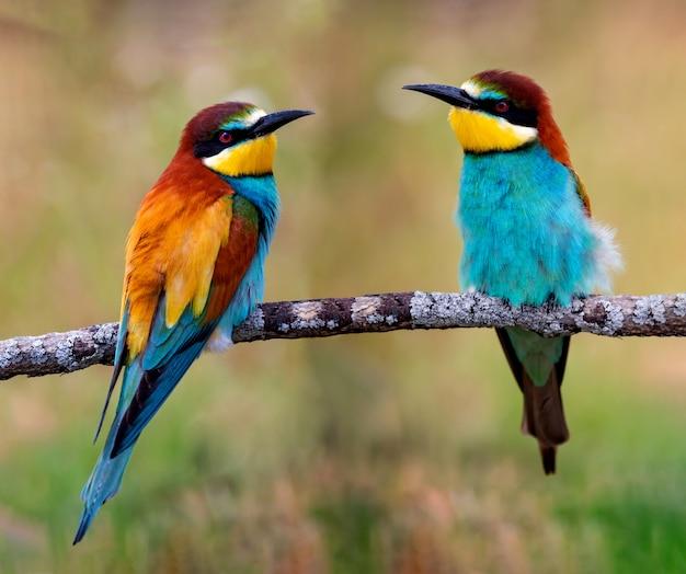 Pássaros coloridos em um galho