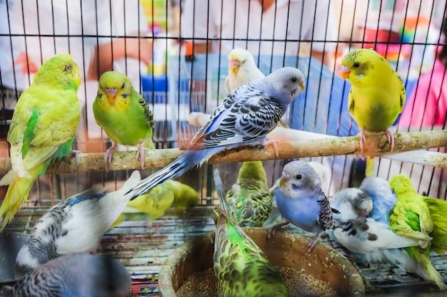 Pássaros coloridos na gaiola