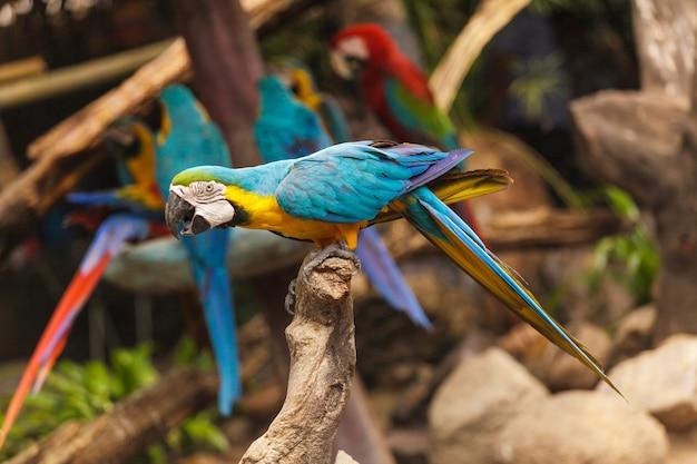 Pássaros da arara