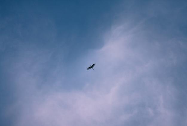 Pássaros e céu azul à noite