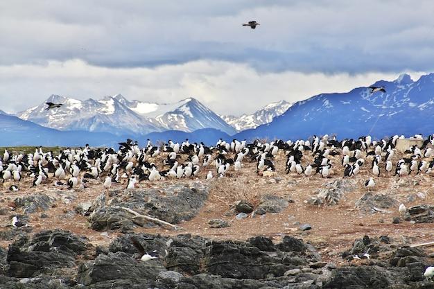 Pássaros e pinguins na ilha do canal de beagle, perto da cidade de ushuaia, terra do fogo, argentina