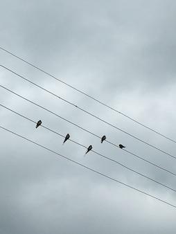Pássaros em fios