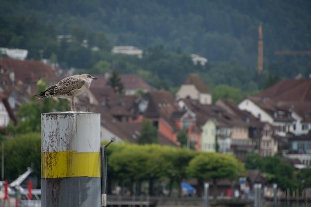 Pássaros em lugano suíça europa