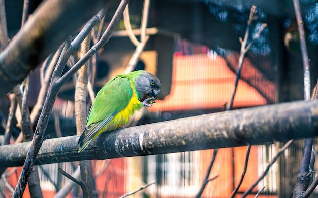 Pássaros em pé na árvore