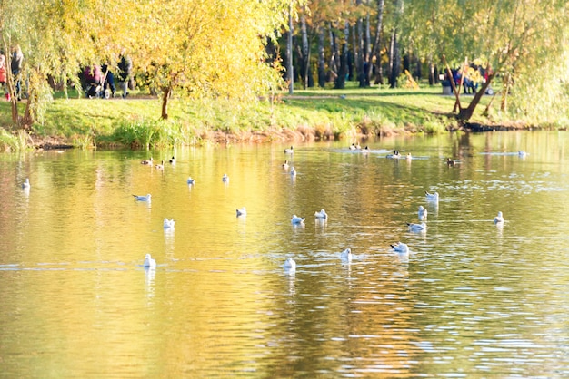 Pássaros em um lago no parque de outono