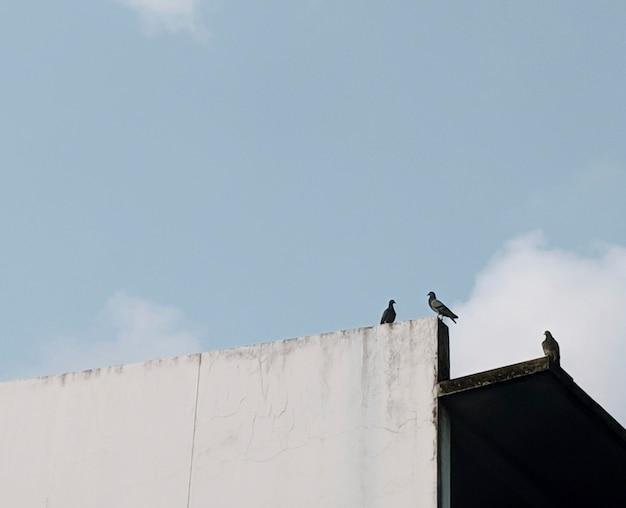 Pássaros empoleirados em uma parede branca