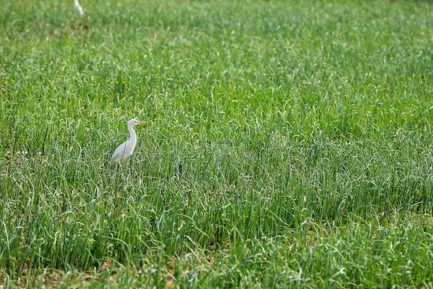 Pássaros flamingo em pé no campo de grama