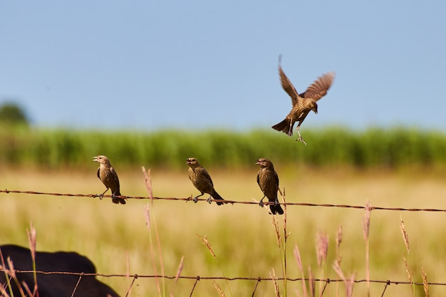 Pássaros na cerca de arame um no ar