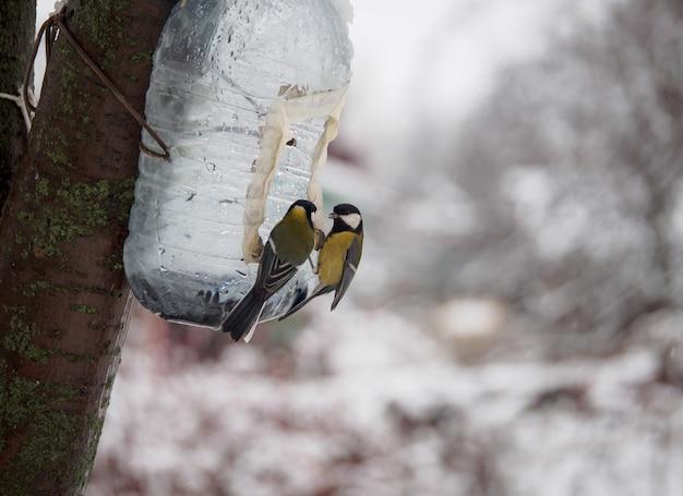 Pássaros na garrafa de água