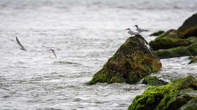 Pássaros nas rochas cobertas com ervas marinhas e lama na costa do oceano