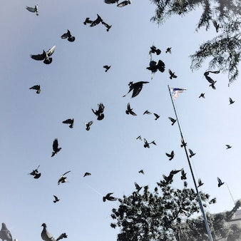 Pássaros no céu