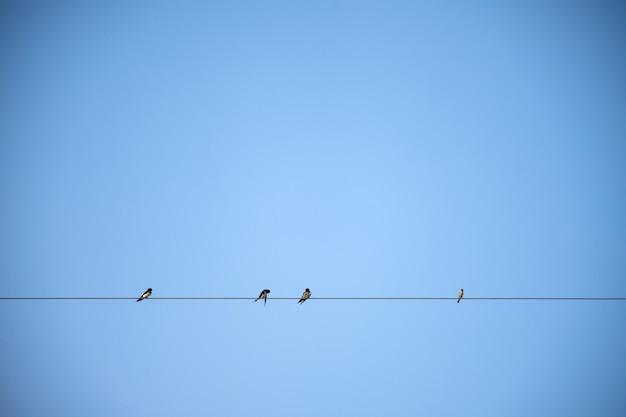 Pássaros no fio de eletricidade com céu azul.