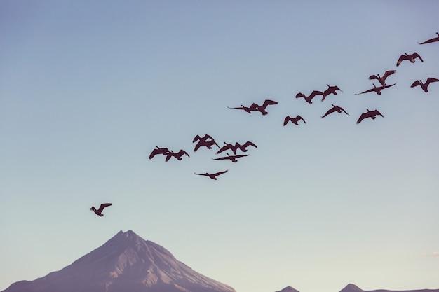 Pássaros no fundo do vulcão taranaki, nova zelândia