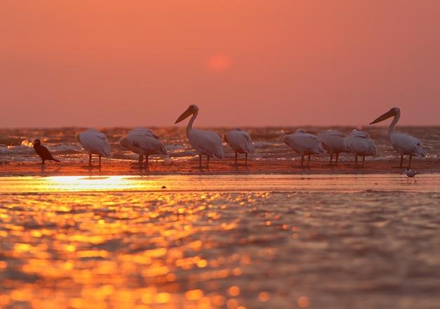 Pássaros nos raios do sol nascente no delta do danúbio. delicada luz rosa da manhã e silhuetas de pássaros e animais.