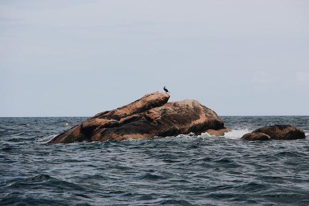 Pássaros sentados em uma grande pedra no mar