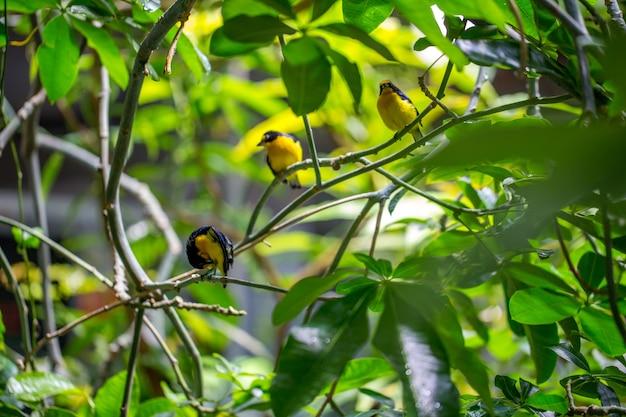 Pássaros sentados no galho