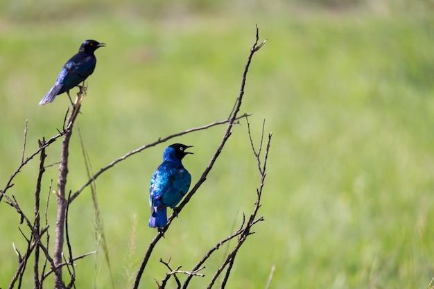 Pássaros sentados nos galhos de uma árvore