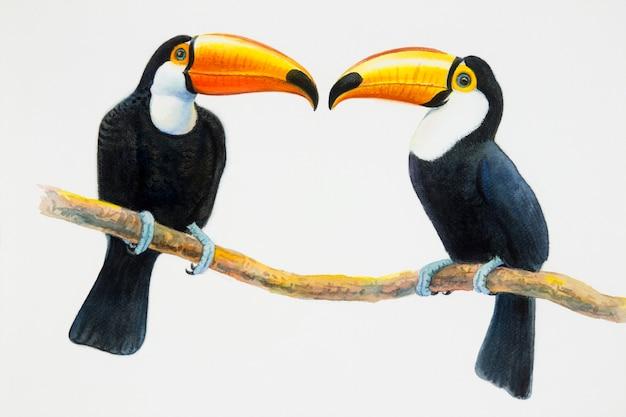 Pássaros tucanos sentados no galho