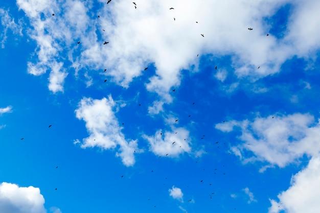 Pássaros voando no céu fotografados em close do céu azul em que um bando de pássaros voando silhuetas visíveis nuvens diurnas