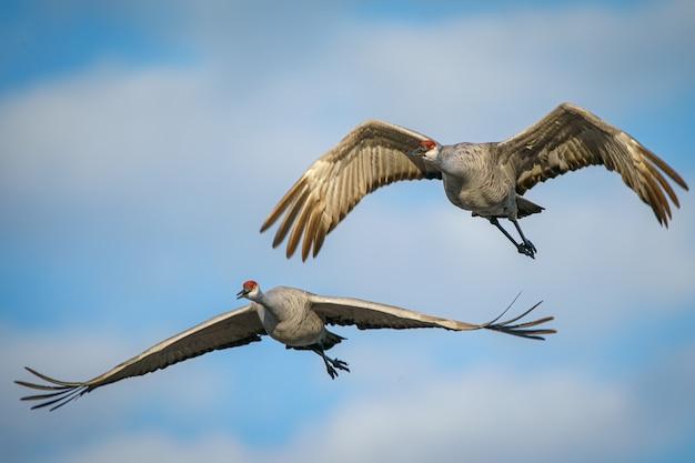 Pássaros voando no céu