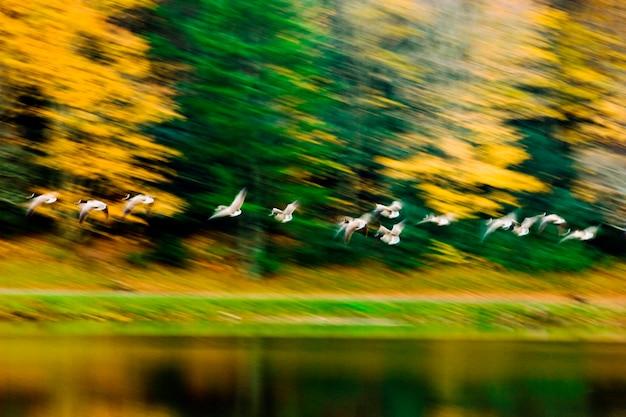 Pássaros voando sobre a água, borrão