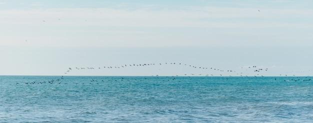 Pássaros voando sobre a superfície do mar