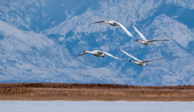 Pássaros voando sobre um lago