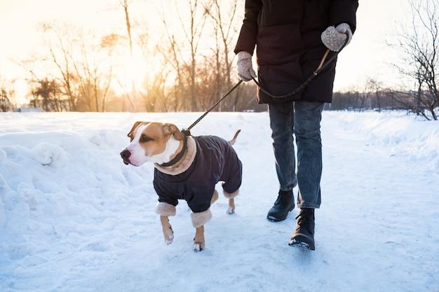 Passeando com o cachorro em um dia frio de inverno. pessoa com um cachorro em roupas quentes na trela em um parque