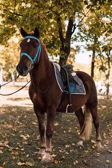 Passeando com um cavalo marrom com uma sela em um parque de outono