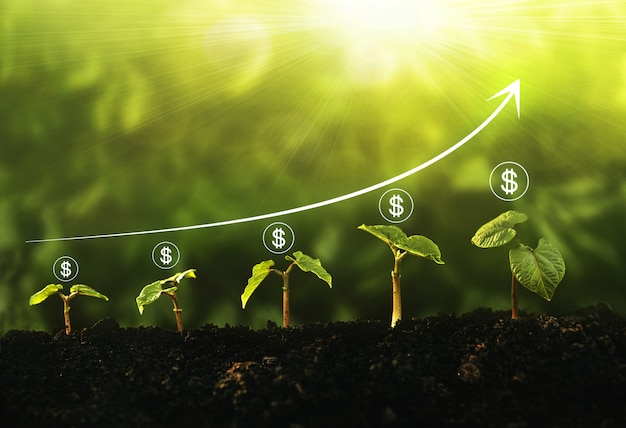 Passo de crescimento de mudas no jardim com o ícone de dólar e o gráfico no fundo ensolarado. conceito de crescimento, lucro, desenvolvimento e sucesso do negócio.