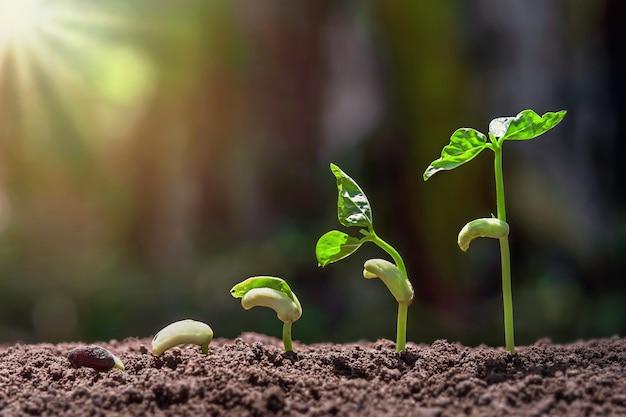 Passo de plantio crescente com fundo verde da natureza e do nascer do sol