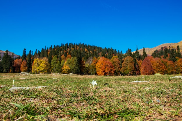 Passo na montanha pyv, na abkházia. magnífica paisagem de outono. prados alpinos. auadhara.