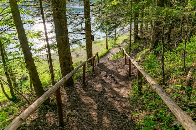 Passos abandonados levam pela floresta até a margem de um lago de montanha.