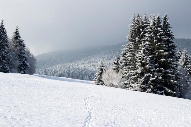 Passos na neve fresca vindo da floresta