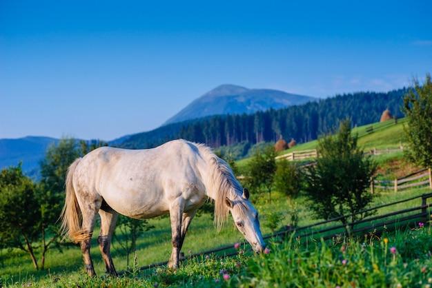 Pastagem de cavalo no verão