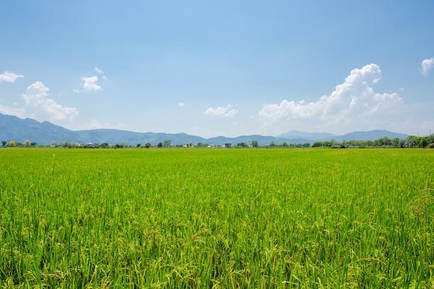 Pastagem verde grama azul na fazenda céu com nuvens, fundos nublados