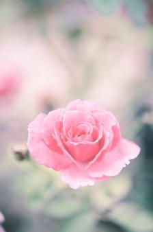 Pastel suave de jardim de rosas vintage